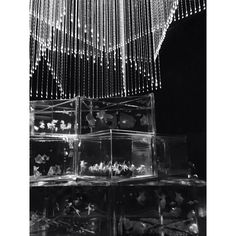 【kaie___】さんのInstagramをピンしています。 《. . . きらびやかな中にも ひっそりと潜む 暗さがあるから 輝きが引き立つ . . . #monochrome #monotone #mono #モノクロ #モノトーン #モノクローム  #blackandwhite #bw_lovers #monochrome_lovers #bnw_captures #ig_japan #igers #photography #photo #ファインダー越しの私の世界 #写真好きな人と繋がりたい #アクアリウム #金魚 #goldfish》