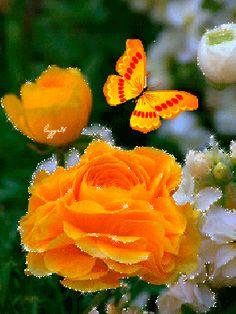 Imagen animada de rosas y una mariposa naranjada