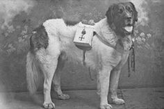 Early 20th Century fundraising scheme Historical Images, Newfoundland, Fundraising, Charity, Literature, America, History, Dogs, Animals