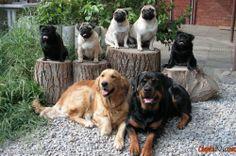 View photo bunte Hunde