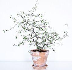 13 najmodniejszych roślin doniczkowych - przegląd subiektywny - Piąty pokój