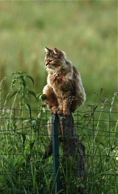 Beautiful photo of cat on field post