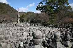 adashino nenbutsuji Kyoto, Vineyard, Japanese, Outdoor, Outdoors, Japanese Language, Vineyard Vines, The Great Outdoors