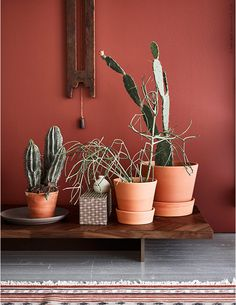 Terracotta pots, dark wood furniture and earthy colors is a trend we're super keen on. Room Colors, House Colors, Colorful Decor, Colorful Interiors, Dark Wood Furniture, Colour Architecture, Diy Décoration, Mid Century Decor, Terracotta Pots