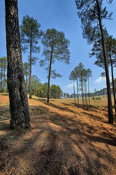 Golf ground of Rankhet (Uttrakhand,IN) is scattered with long and thin pine tree which offered vertical composition. Hiking Places, Places To Travel, Travel Destinations, Places Around The World, Around The Worlds, Iron Man Wallpaper, Mussoorie, India Culture, Hindu Temple