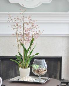 Orchids part 2