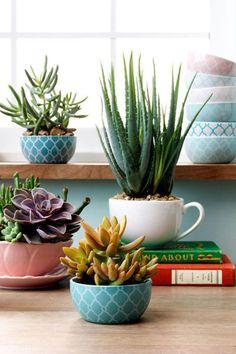 plantes grasses d'intérieur, belles assiettes utilisées comme pots de fleurs