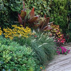 Purple fountain grass, canna, black eyed susan, wave petunias, coleus and a hint of lantana all creat a great full sun accent with height and texture along this walkway. Hardscape, Plants, Grasses Garden, Ornamental Grasses, Grass, Outdoor Gardens, Perennials, Garden Accents, Beautiful Gardens
