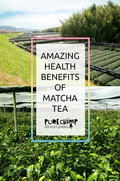 Health benefits of matcha green tea inside! It's packed full of healthy antioxidants and has a long list of feel good benefits. Matcha Tea Benefits, Matcha Green Tea, Superfoods, Health Benefits, Feel Good, Feelings, Amazing, Super Foods