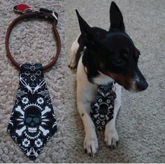 Skull and Crossbones Dog Tie by dogties on Etsy, $8.00