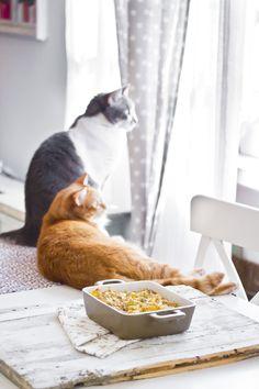 La gatta col piatto che scotta