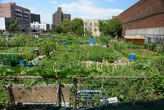 While urban agriculture can play a role in supporting food supply chains for many major American cities — contributing to food diversity, sustainability and localizing food systems — researchers say it is unrealistic to expect rooftop gardens, community plots and the like to provide the majority of nutrition for the population of a metropolis. Farming System, Hydroponics System, Urban Agriculture, Urban Farming, List Of Nutrients, Vertical Farming, Food Security, Seeds, Canning