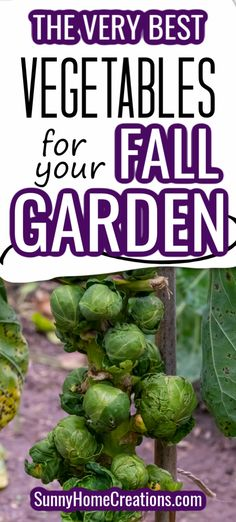 If you are planning a fall garden this year, check out these veggies that are a must to plant in your home garden.  #fallgarden #homegarden #fallhomegarden #gardenideas #fallgardenideas #gardening Fall Vegetables, Growing Vegetables, Growing Tomatoes, Gardening For Beginners, Gardening Tips, Vegetable Garden Design, Vegetable Ideas, Vegetable Gardening, Veggie Gardens