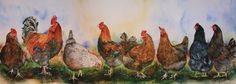 Meet the Chickens! by Betty Kloosterman