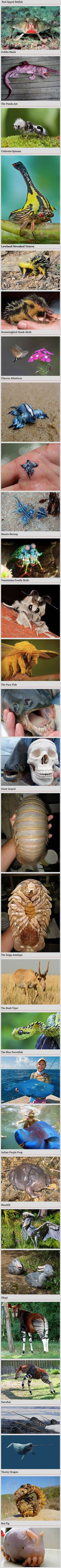 We've rounded up some bizarre and crazy animals you never knew existed. I knew about the goblin shark, the mantis shrimp, the bush viper, the narwhal, and the thorny dragon! What about you? -Grace: