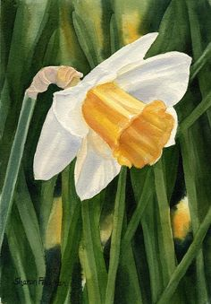 Single Yellow Daffodil Painting by Sharon Freeman - Single Yellow Daffodil Fine Art Prints and Posters for Sale