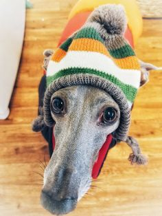 Asher The Italian Greyhound Ready For Snow Day Follow Him On Facebook With Images Animal Fashion Italian Greyhound Greyhound