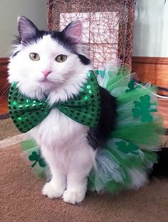 12 Adorable Pets Totally Ready for St. Patrick's Day 12 Adorable Pets Totally Ready for St. Patrick's Day I Love Cats, Cute Cats, Funny Cats, Crazy Cat Lady, Crazy Cats, Cat Hacks, Puppy Day, Cat Costumes, Animal Costumes