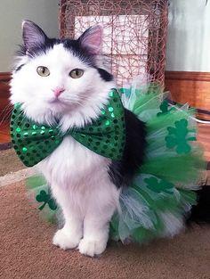"Sophie says ""Happy St. Patricks Day"""