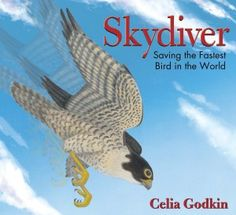 Skydiver: Saving the Fastest Bird in the World, by Celia Godkin Fastest Bird, Peregrine Falcon, Best Children Books, Endangered Species, S Pic, Nonfiction Books, New Books, World, Illustration