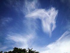 """""""Pegasus~♪""""  04.Aug.2014  ホテルに戻る車を降りた時、ふと空を見上げると…ペガサスが駆け抜けた〜♡ こんな時はiphoneでね。笑"""