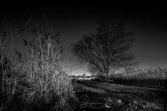 Nieuw in mijn Werk aan de Muur shop: Between reed and tree