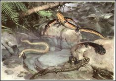 Zdenek Burian 1905 ~ 1981  Prehistoric Animals Published by  Paul Hamlyn Ltd ~ 1960