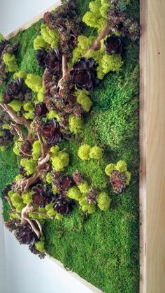 "Preserved Plants: Sheet Moss, Royal Pool Moss, Chartreuse colored Reindeer Moss, Driftwood, assorted Succulents.Frame: Wood with a natural satin-finish. Origin: Hawaii, ""Made in Hawaii""SpecificationsSold By            Designs Reimagined, LLC Width               30"" Depth               3"" Height              30"" Weight             20 lb. Materials        100% natural selected moss                                                   arrangement, artificial succulents,  …"