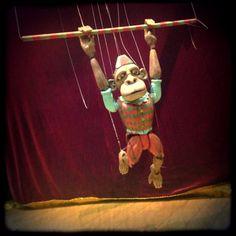 Monkey acting