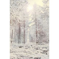Nature Photography, Forest, Snow, Winter Sun, Fairytale, Frosty,... ($55) ❤ liked on Polyvore featuring backgrounds, pictures, image, christmas and winter