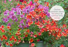 Seeds, Bulbs, Plants - All Your Gardening Needs | Sarah Raven