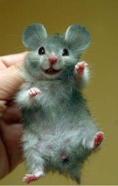 I wish I had a hamster! And its mickey hamster The Animals, Happy Animals, Felt Animals, Cute Baby Animals, Funny Animals, Smiling Animals, Cute Creatures, Beautiful Creatures, Animals Beautiful
