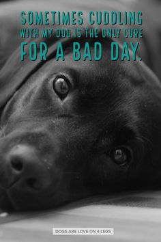 Better Pictures - Dog Quote - Sometimes cuddling with my dog. Dog, Dog Quotes Inspirational Quotes, Funny Quotes, Life Quotes To anybody wanting to take better photographs today I Love Dogs, Puppy Love, Cute Dogs, Dog Quotes Funny, Funny Dogs, Pet Quotes, Labrador Quotes, Animal Quotes, Animal Memes
