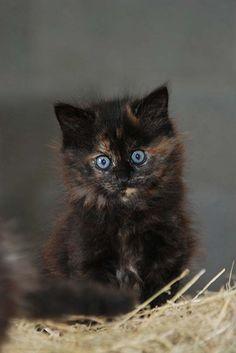 Cute Little Stare!