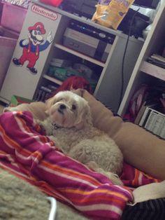 Animals Popular, Dogs, Animals, Animales, Animaux, Pet Dogs, Popular Pins, Doggies, Animal