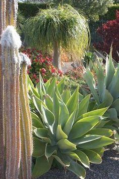 LA Times - A frontyard succulent garden: Va-va-bloom!