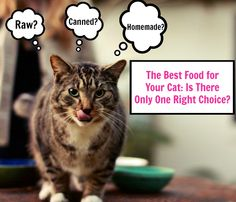 Hwo to find a diet that provides food your cat enjoys and thrives on, and one that is sustainable for you.