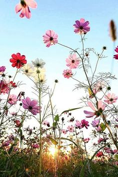 Such gorgeous meadow flowers, takes me immediately to a spring day . Such gorgeous meadow flowers, takes me immediately to a spring day . Amazing Flowers, Pretty Flowers, White Flowers, Spring Flowers, Happy Flowers, Fresh Flowers, Cosmos Flowers, Meadow Flowers, Flowers Nature