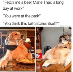 Guy Hilariously Captions Funny Animal Photos And We Can't Get Enough