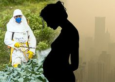 There is a growing body of research showing that autism risk is elevated by certain environmental factors such as toxins. For example, the mother's exposure to organophosphate pesticides during pregnancy was associated with increased risk for autism for the child. Air pollution has also been associated with increased risk for autism: mothers of autistic children were more likely to have lived in homes exposed to high traffic-related air pollution during their pregnancy.