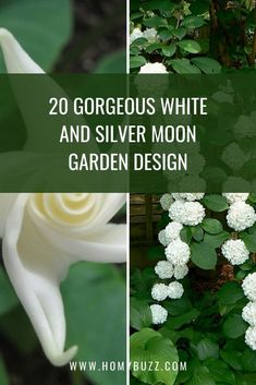 20 Gorgeous White and Silver Moon Garden Design - HomyBuzz