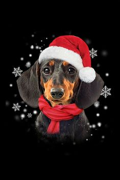 Dachshund Quotes, Dachshund Art, Merry Christmas Dog, Christmas Animals, Daschund Tattoo, Cute Baby Animals, Animals And Pets, Les Moomins, Dog Grooming Styles