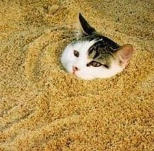 Cat-proof your sand box