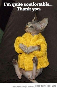 Cat Coat ¤ Lovely Cats