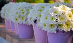 White flowers in lilac vases
