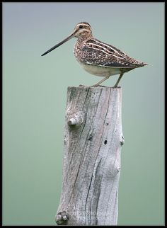 Snipe :), A joke behind this one about when kids were little, lol