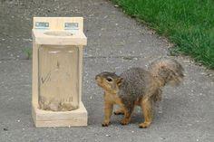 DIY Jar Stand Feeder for your friendly neighborhood squirrels! #DIY - PetDIYs.com