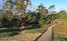 CARMEL BY THE SEA: Carmel-by-the-Sea Jane Powers Walkway Loop Plus Carmel Beach Walking Tour - Part 2