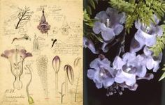 Since 1890, Harvard's glass flowers have fascinated both academics and the general public. Made in Dresden, Germany, these full-size specimens are meticulously detailed, existing as both scientifically accurate models and unusual pieces of art.