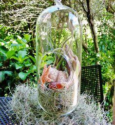 Nature Lovers Terrarium  Large Bullet by BeachCottageBoutique, $34.00